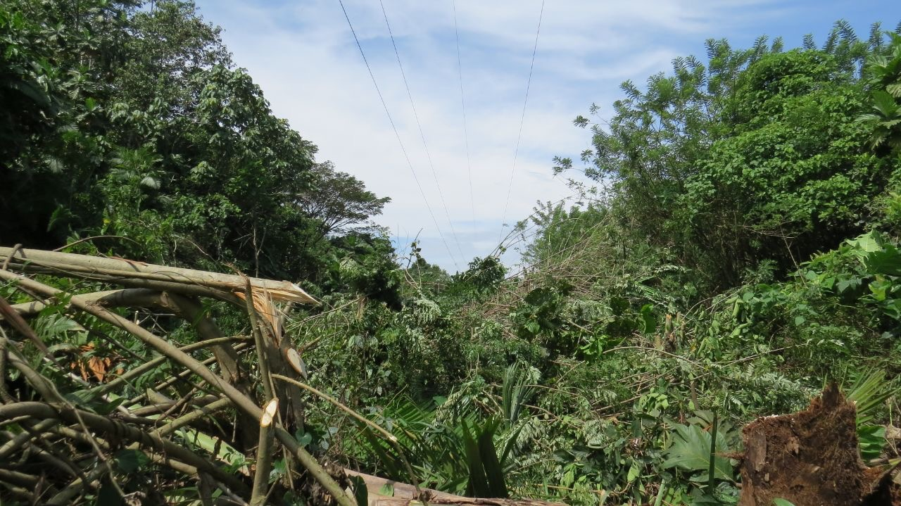 Linesmen clear trees to avoid power cuts to Madang